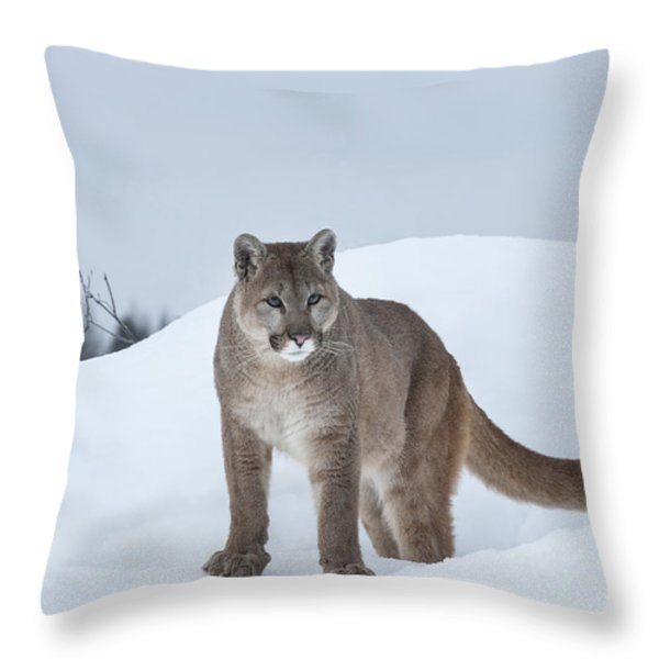 Winter Mountain Lion  Throw Pillow by Sandra Bronstein