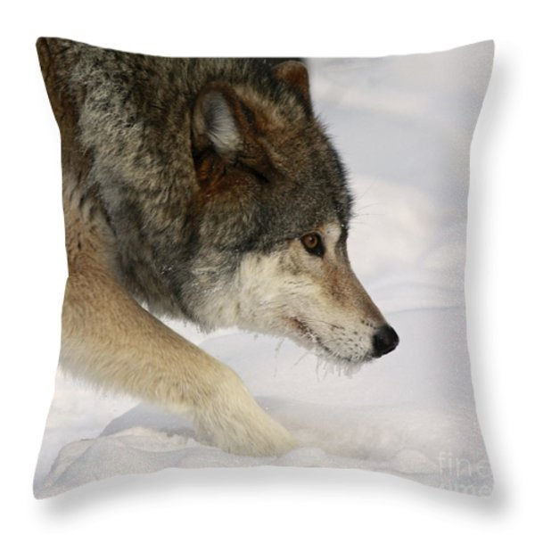 Wolf Dreams Throw Pillow by Inspired Nature Photography By Shelley Myke