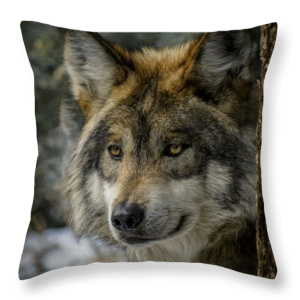 Wolf Upclose 2 Throw Pillow by Ernie Echols