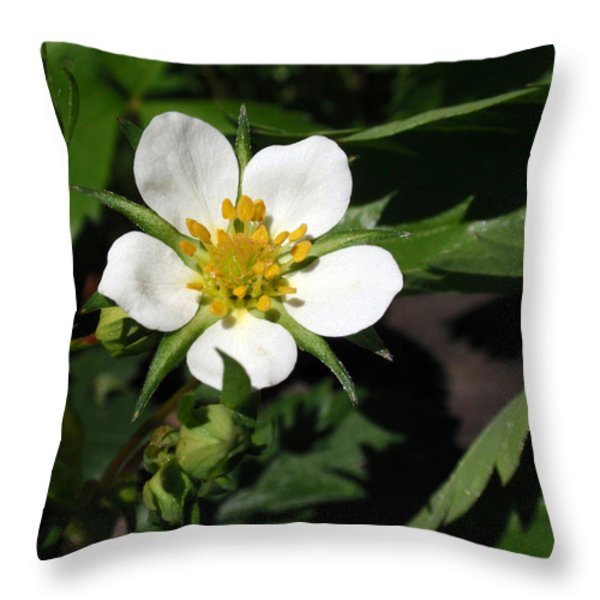 Wood Strawberry Throw Pillow by Christina Rollo