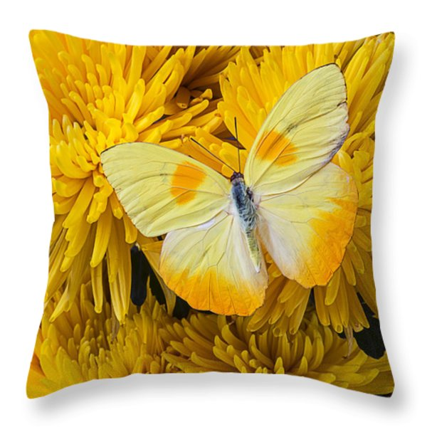 Yellow Butterfly On Yellow Mums Throw Pillow by Garry Gay