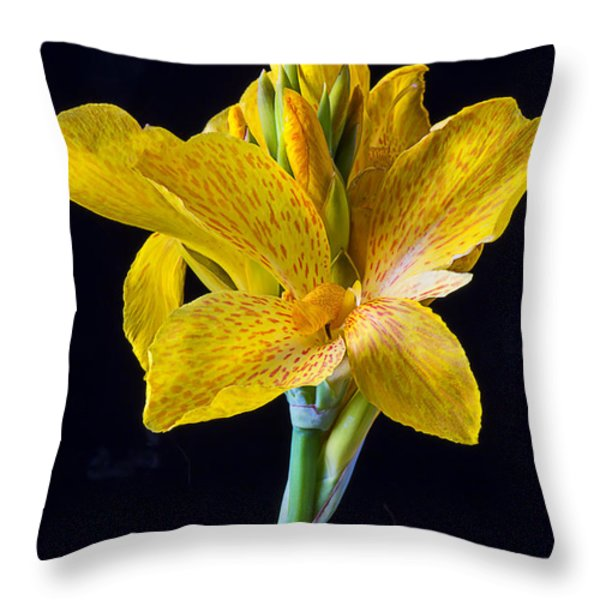 Yellow Canna Flower Throw Pillow by Garry Gay