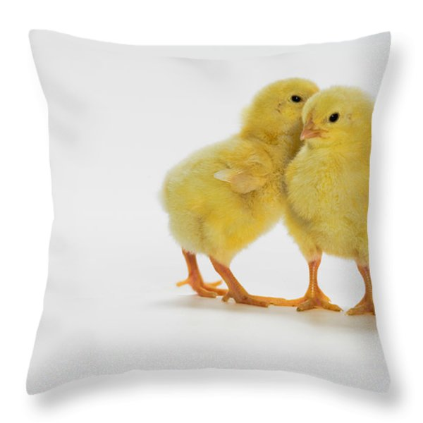 Yellow Chicks. Baby Chickens Throw Pillow by Thomas Kitchin & Victoria Hurst