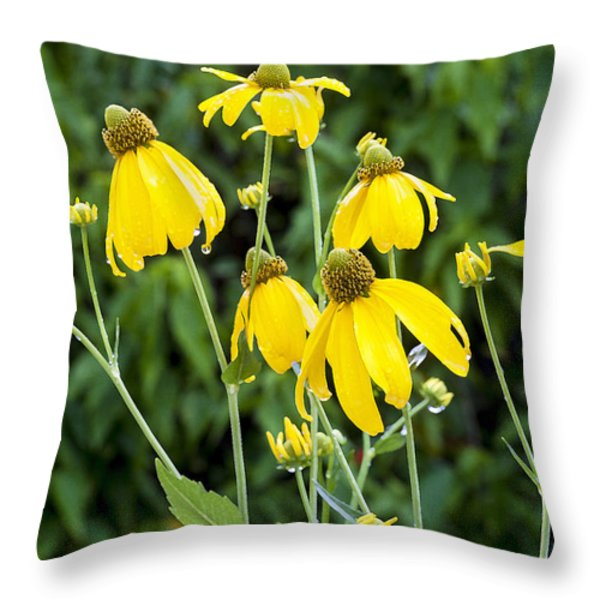 Yellow Cone Flowers Rudbeckia Throw Pillow by Rich Franco