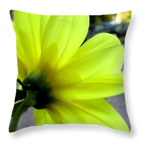 Yellow Dahlia Bloom Throw Pillow by Danielle  Parent