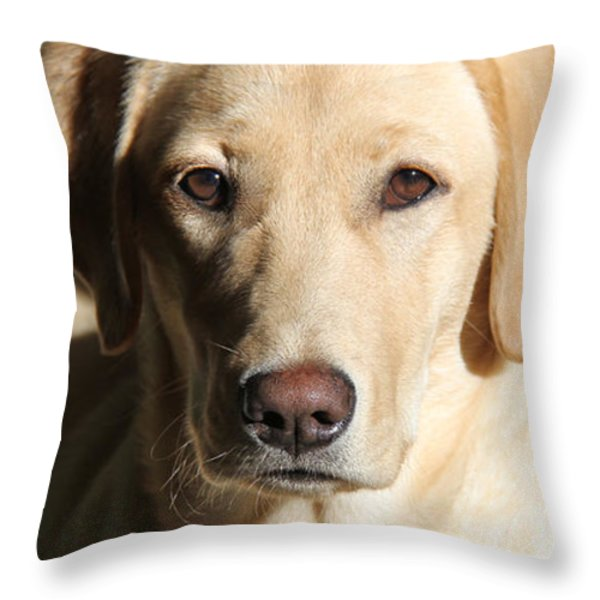 Yellow Labrador Retriever Dog Youth Throw Pillow by Jennie Marie Schell