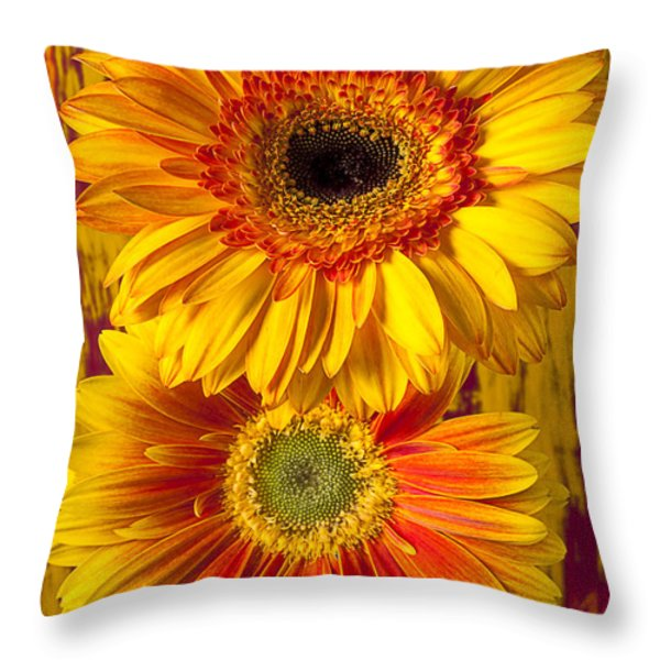 Yellow Mums Together Throw Pillow by Garry Gay