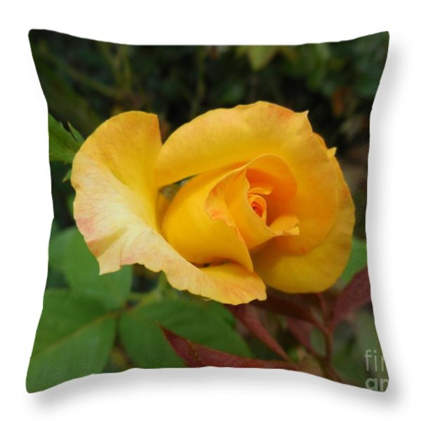 Yellow Rose Of Texas Throw Pillow by Eloise Schneider