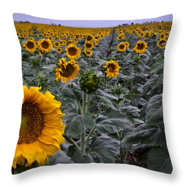 Yellow Sunflower Field Throw Pillow by Dave Dilli