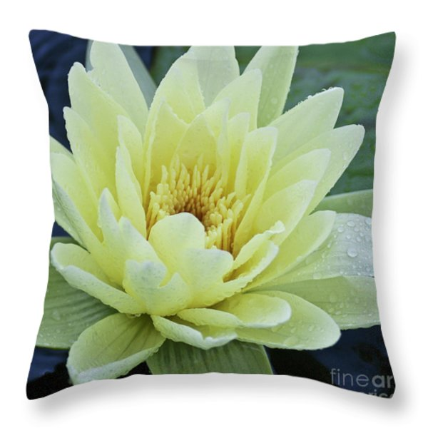 Yellow Water Lily Nymphaea Throw Pillow by Heiko Koehrer-Wagner