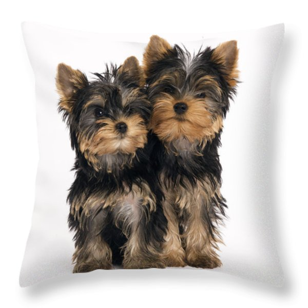 Yorkie Puppies Throw Pillow by Jean-Michel Labat