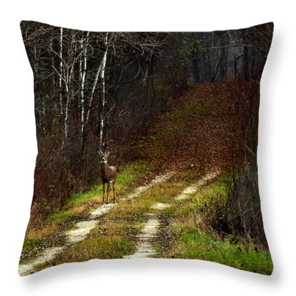 Young Buck And Autumn Throw Pillow by Thomas Young