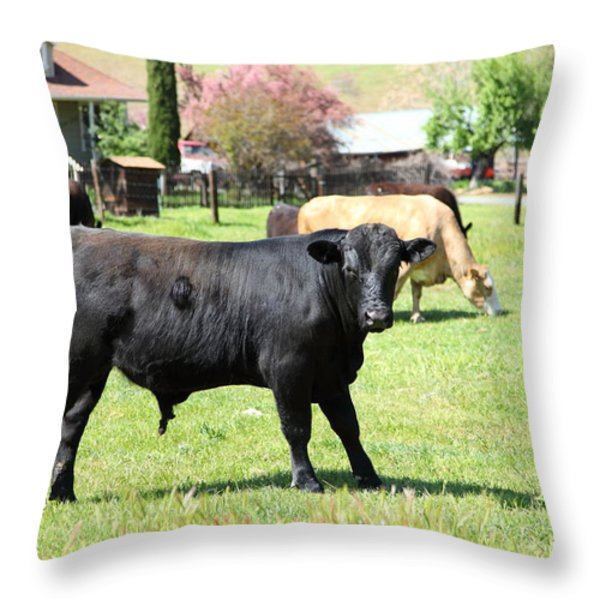 Young Bull Home On The Ranch At The Black Diamond Mines in Antioch California 5D22349 Throw Pillow by Wingsdomain Art and Photography