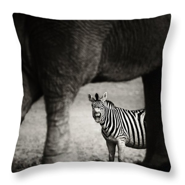 Zebra Barking Throw Pillow by Johan Swanepoel