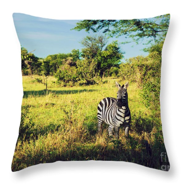 Zebra In Grass On African Savanna. Throw Pillow by Michal Bednarek