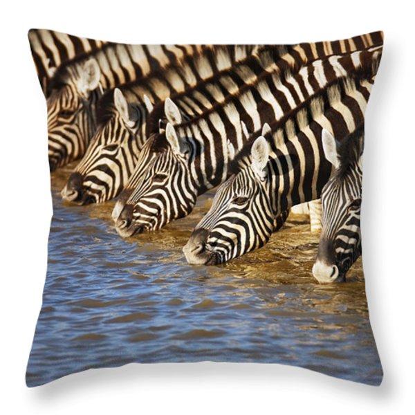 Zebras Drinking Throw Pillow by Johan Swanepoel