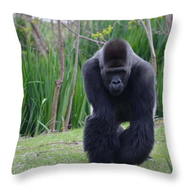Zootography Of Male Silverback Western Lowland Gorilla On The Prowl Throw Pillow by Jeff at JSJ Photography