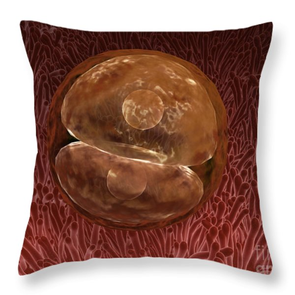 Zygote Development 24-36 Hours Throw Pillow by Stocktrek Images