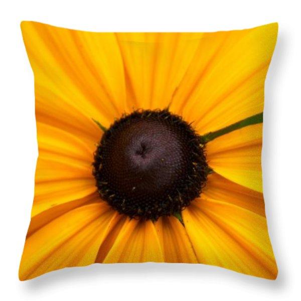 Goldilocks Gloriosa Daisy 2 Throw Pillow by Jouko Lehto
