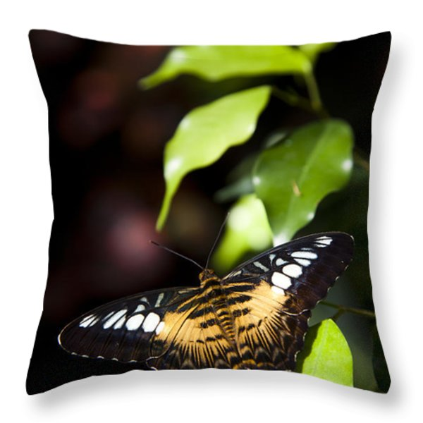 A Butterfly Perches On A Leaf Throw Pillow by Taylor S. Kennedy