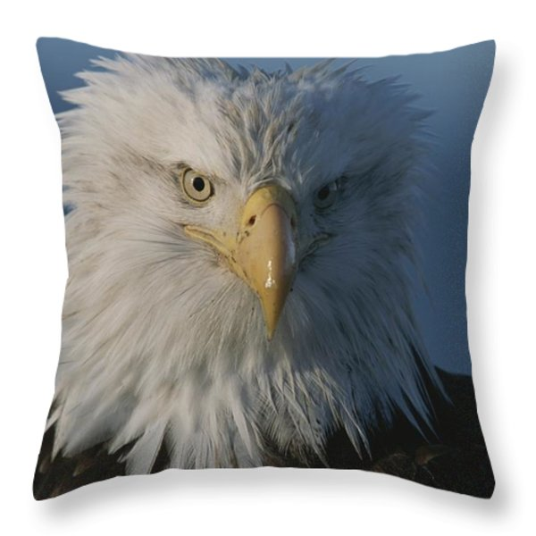 A Close View Of A Northern American Throw Pillow by Norbert Rosing