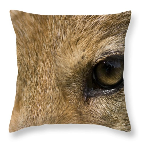 A Coyote At A Wildlife Rescue Members Throw Pillow by Joel Sartore