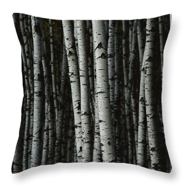 A Forest Of White Birch Trees Betula Throw Pillow by Medford Taylor
