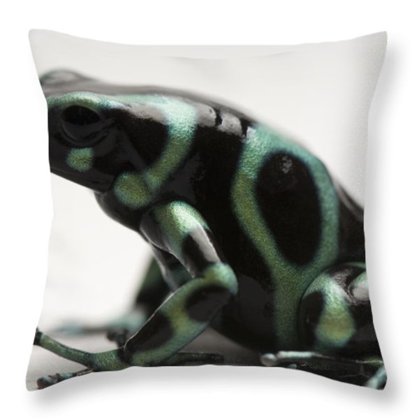 A Green-and-black Poison Dart Frog Throw Pillow by Joel Sartore