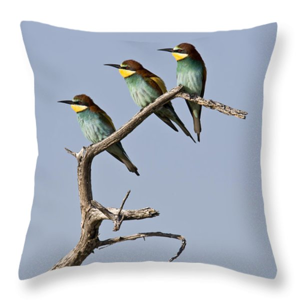 A Group Of Bee-eaters Resting On Branch Throw Pillow by Roy Toft