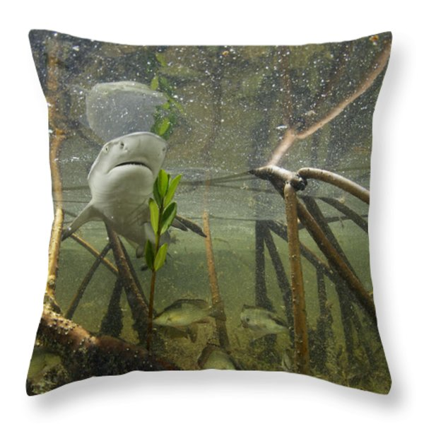 A Lemon Shark Pup Swims Among Mangrove Throw Pillow by Brian J. Skerry
