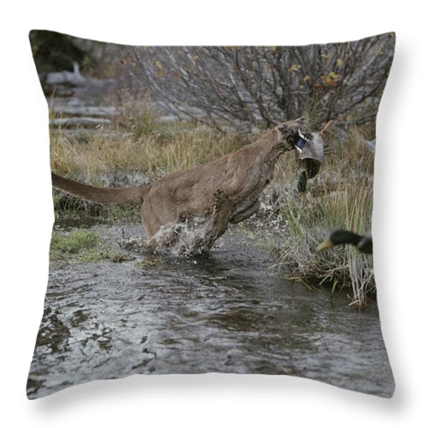 A Mountain Lion, Felis Concolor, Hunts Throw Pillow by Jim And Jamie Dutcher