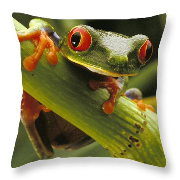 A Red-eyed Tree Frog Agalychnis Throw Pillow by Steve Winter