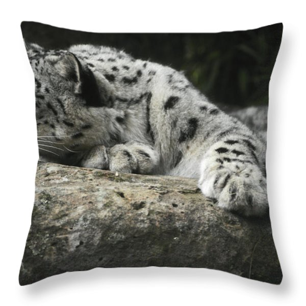 A Snow Leopard Takes Time Out To Rest Throw Pillow by Jason Edwards