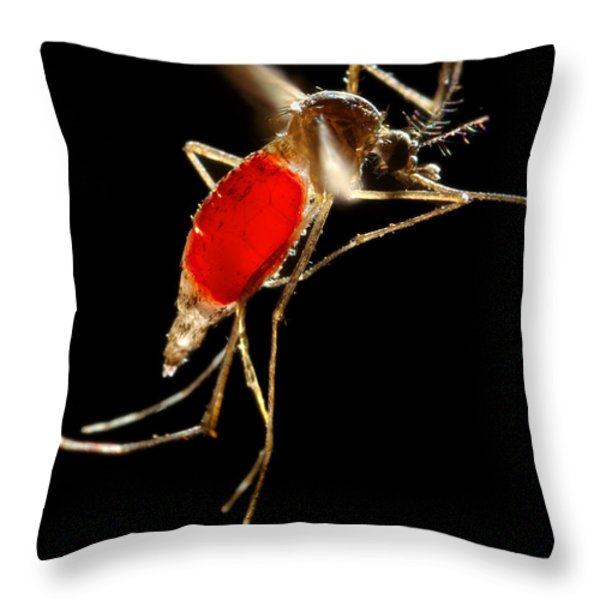 Aedes Aegypti Mosquito Throw Pillow by Science Source