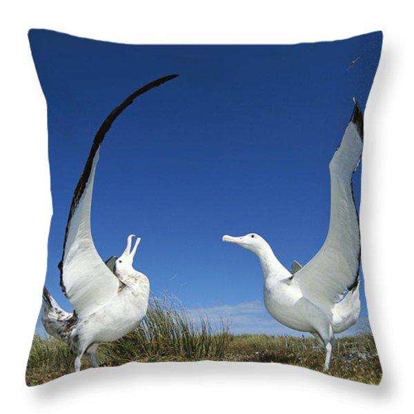 Antipodean Albatross Diomedea Throw Pillow by Tui De Roy