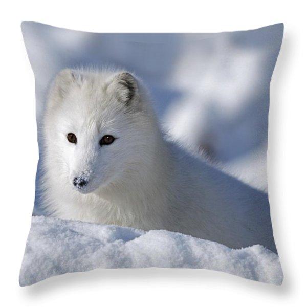 Arctic Fox Exploring Fresh Snow Alaska Throw Pillow by David Ponton