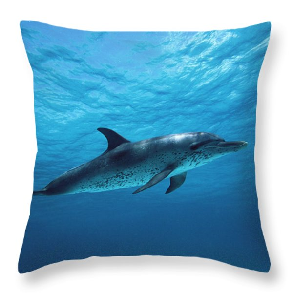 Atlantic Spotted Dolphin Stenella Throw Pillow by Todd Pusser