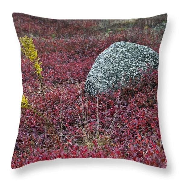 Autumn Blueberry Field Throw Pillow by John Greim