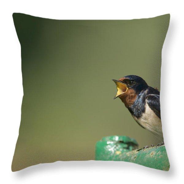 Barn Swallow Hirundo Rustica Fledgling Throw Pillow by Cyril Ruoso