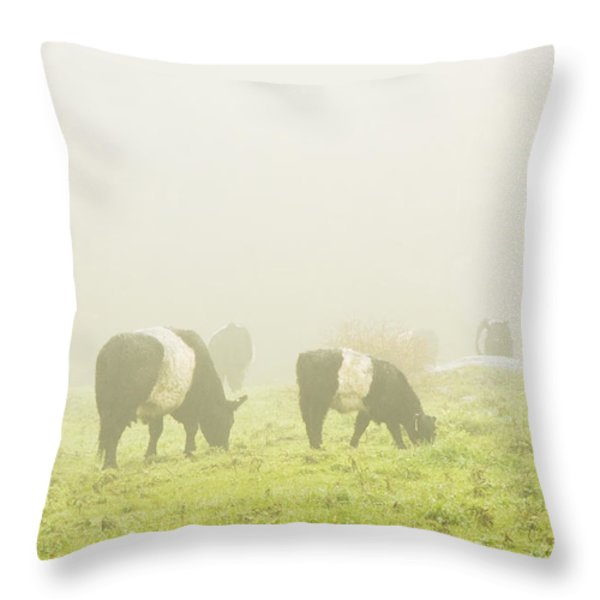 Belted Galloway Cows Grazing On Foggy Farm Field Maine Throw Pillow by Keith Webber Jr