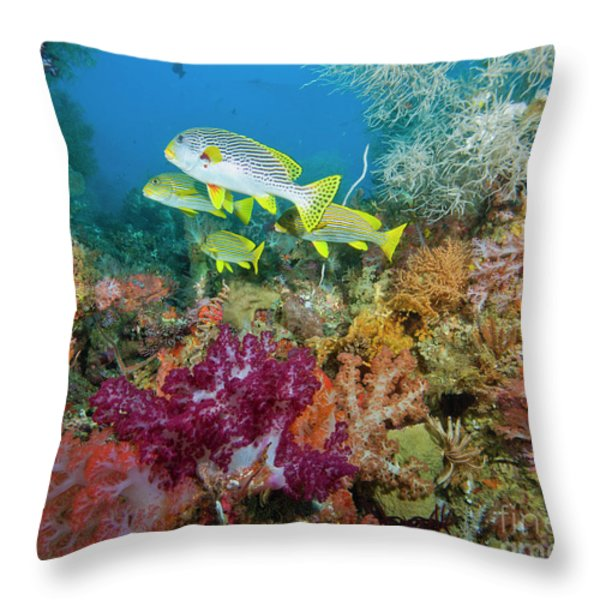 Blue Banded Sweetlip Fish And Coral Throw Pillow by Beverly Factor