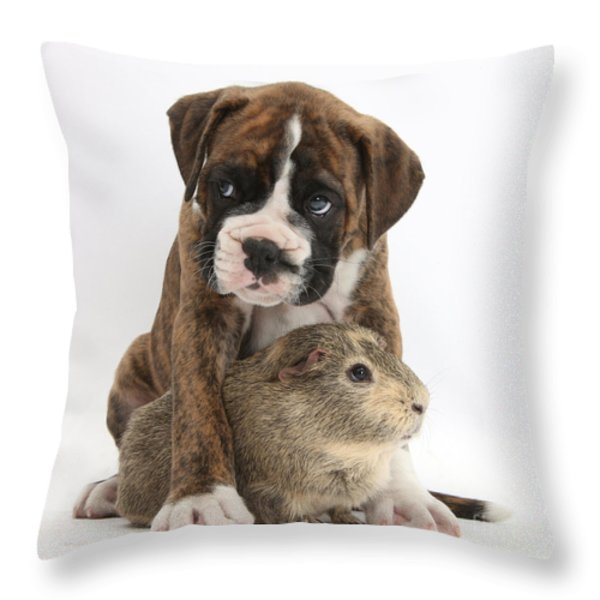 Boxer Puppy And Guinea Pig Throw Pillow by Mark Taylor