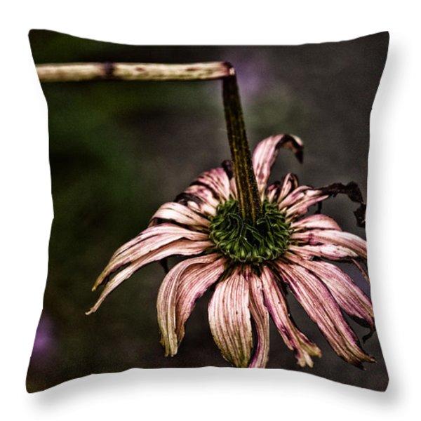 Broken Throw Pillow by Karol  Livote