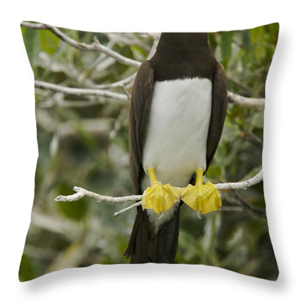 Brown Booby, Sula Leucogaster Throw Pillow by Tim Laman