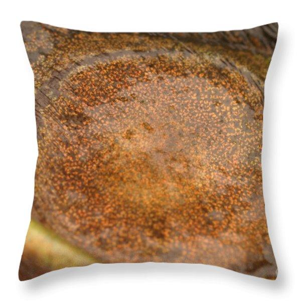Bullfrog Ear Throw Pillow by Ted Kinsman