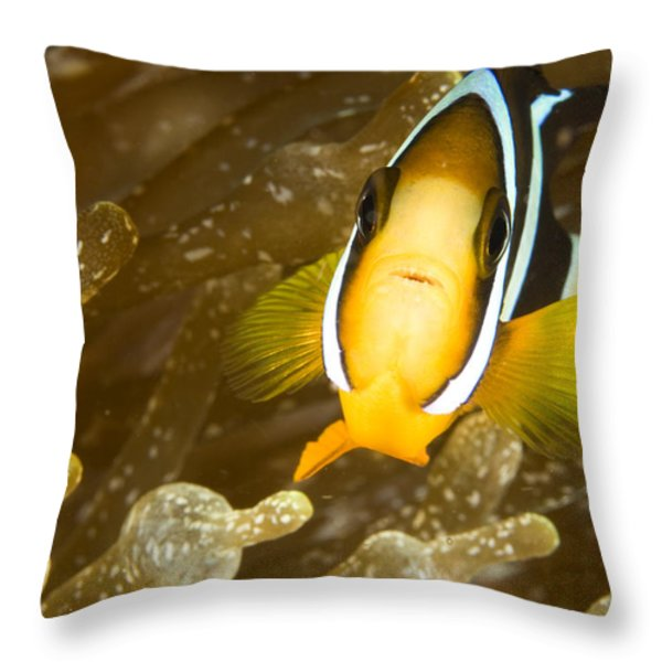Clarks Anemonefish Among An Anemones Throw Pillow by Tim Laman