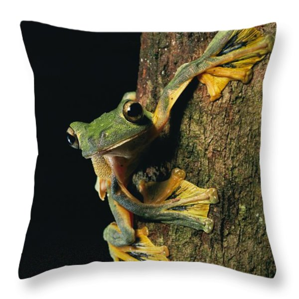 Close View Of A Wallaces Flying Frog Throw Pillow by Tim Laman