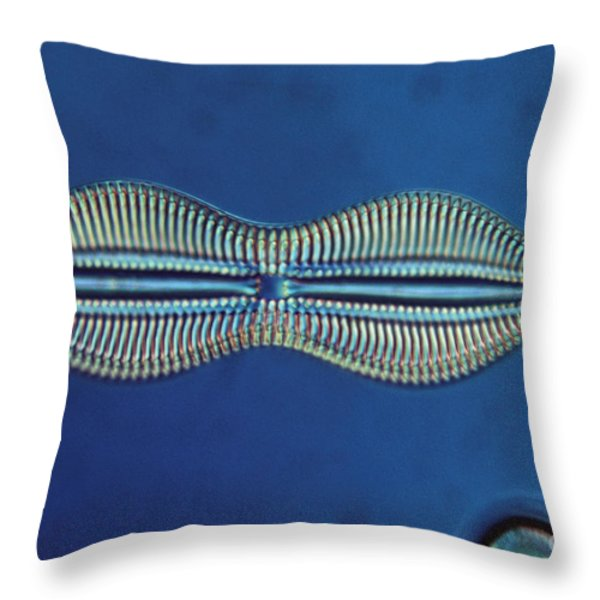 Diatom - Diploneis Crabro Throw Pillow by Eric V. Grave