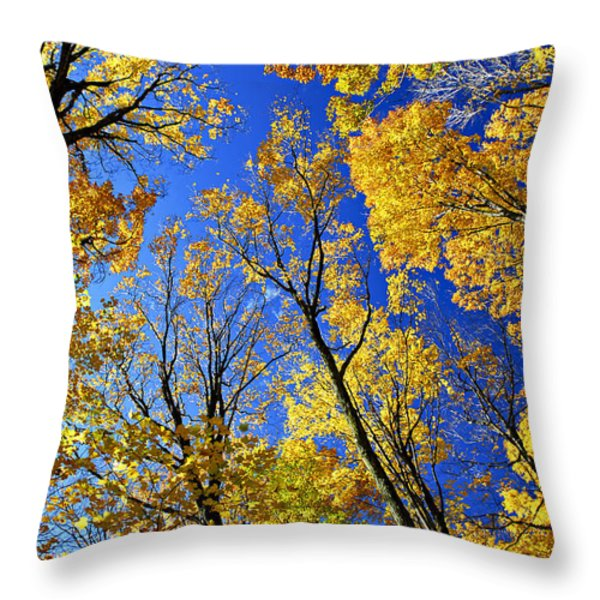 Fall Maple Trees Throw Pillow by Elena Elisseeva