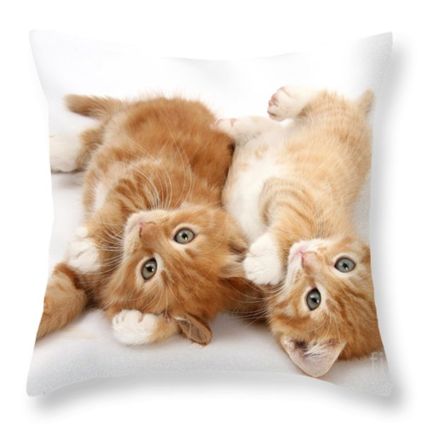 Ginger Kittens Throw Pillow by Mark Taylor